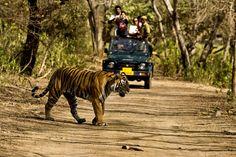 Bring on the adventure at Jim Corbett, safari in India.