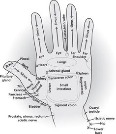Energy areas of your hands that can be used for acupressure, energy healing, as well as direct hand massage to get the energy flow patterns for these areas of the body in a high vibrational format. Try drawing the Reiki Power Symbol over the area before y Young Living Oils, Young Living Essential Oils, Ayurveda, Hand Reflexology, Reflexology Points, Acupuncture Points, Acupressure Points, Doterra Essential Oils, Massage Therapy