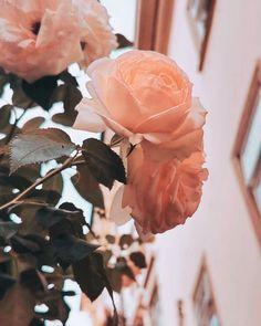 𝐿𝒶 𝒱𝒾𝑒 𝐸𝓃 𝑅𝑜𝓈𝑒   Ein Paradies voller Blüten mitten in Villach. Schon im Palais26 vorbeigeschaut? . #stayinstyle #palais26villach #lavienrose #urbangardening #villach #rosengarten #blütenpracht #villachfeeling #hotellerie #hotelgoals #villachcity #kärntenlustamleben #kärntengoodlife #carinthiaparks #carinthiansummer #rosenblüten #faakersee #urlaubinösterreich #österreichurlaub Crown, Instagram, Villach, Paradise, Corona, Crowns