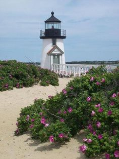Another beautiful lighthouse and I love the purple flowers.