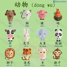 Animals Animals Related posts: Chinese Words for Animals Chinese Phrases, Chinese Words, Basic Chinese, Chinese English, Chinese Lessons, Spanish Lessons, Teaching Spanish, Spanish Activities, French Lessons