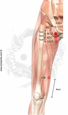 H12 Mueve el Qi del canal Beneficia los genitales Dolor de pierna Relaja musculos y tendones Dolor inguinal Hernia inguinal Problemas genitales
