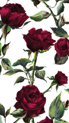 Beauty and The Beast那么火,手机当然也要应景一下!40张必收藏的玫瑰手机壁纸,伴你度过唯美浪漫的时刻!