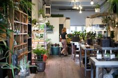 The Palm Room in Ballard: favorite source for succulents.
