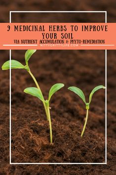 We often think of herbs for their culinary & medicinal values. But through nutrient accumulation and phyto-remediation, here are 10 herbs to improve your soil! #soilimprovement #gardening #organic #phyto-remediation  via @nittygrittylife