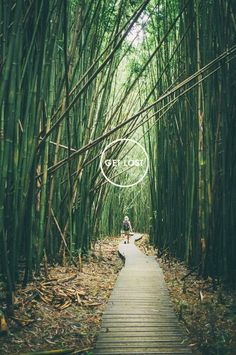 Would love to hike through this! Haleakala Bamboo Forest, Maui.