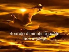 PASARILE PARADISULUI SPUNEAU ... - YouTube Alba, Face, Youtube, Movie Posters, Movies, Video Clip, 2016 Movies, Film Poster, Films