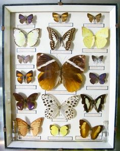 #Butterflies #Collection