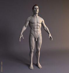 Human male model Model in Man 3d Anatomy, Anatomy Reference, Statue, Model, Google, Image, Scale Model, Anatomy