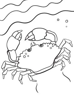 Printable crab coloring page. Free PDF download at http://coloringcafe.com/coloring-pages/crab/.