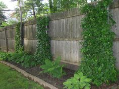 Transformed neighbor's ugly fence into a ivy-covered backdrop for a garden.