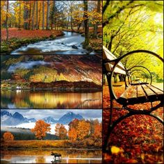 Fall is here, nature has prepared a varied range of colors