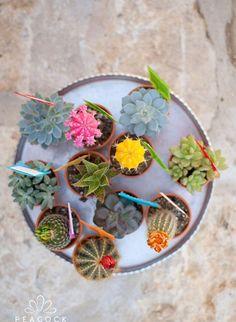 Cactus wedding favors!
