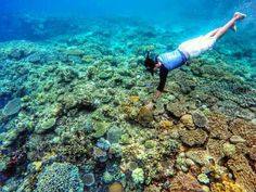 Terumbu Karang Morela - Ambon, Maluku