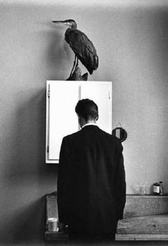 Andre Kertesz - Bird on a Cabinet