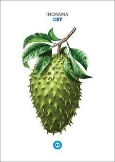 INORAMA / Fruits & Vegetables Illustration / @ : oxy-illustrations@orange.fr