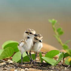 Tiny friends!