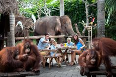 Bali Zoo Tickets Price 2018 | Online Tickets Booking Bali Zoo Park