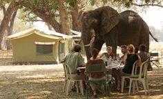 Mana Pools National Park, Zimbabwe. Pin repinned by Zimbabwe Artisan Alliance.