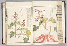 Manual ilustrado de plantas medicinales — Visor — Biblioteca Digital Mundial