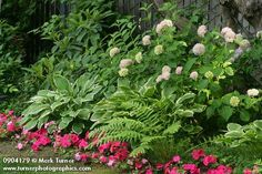 Hydrangea hostas and fern with impatiens. To add the hint of color with the impatients? Amazing Gardens, Beautiful Gardens, Front Yard Decor, Backyard Landscaping, Landscaping Ideas, Backyard Designs, Garden Landscape Design, Creative Landscape, Garden Projects