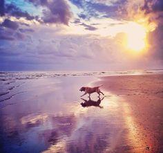 dog walking beach