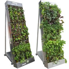 urban farming: mobile edible walls #food #farming #urban