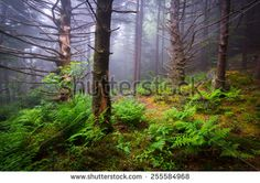 Appalachian Mountains Stock Photos, Images, & Pictures | Shutterstock