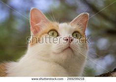 Sammy the Cat - stock photo