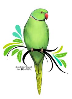 A green Indian Ringneck Parrot. This is my own original design! You can purchase it and many other designs on the link here. Mugs, t-shirts, stickers, posters, etc. Art Drawings For Kids, Cute Animal Drawings, Pencil Art Drawings, Bird Drawings, Easy Drawings, Parrot Drawing, Parrot Painting, Bird Wallpaper, Color Pencil Art