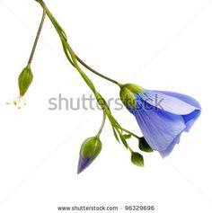 Wild Flowers by Elena Larina, via ShutterStock