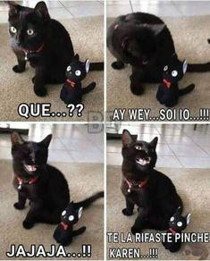 ▷Memes de Karen y el gato parte 4 - ▷ Memes en Español, la mejor recopilacion de memes lo mas viral de internet Memes Pr, Funny Memes, Jokes, Funny Spanish Memes, Spanish Humor, Image Memes, Cool Pets, Baby Animals, Manga Anime