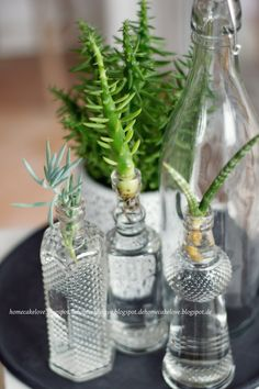 Urban Jungle Bloggers: Plants & Glass by Home Cake Love