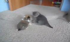 Kitten vs Puppy - cinemaon.net