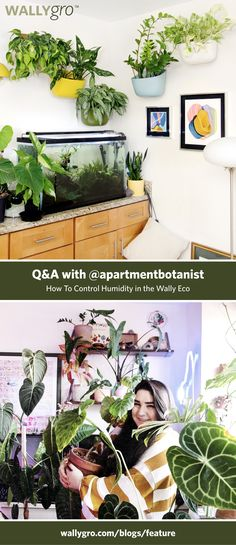 Q&A: Rare Plants and Humidity with Vertical Garden Wall, Rare Plants, Planters, Spa, Gardening, Blog, Photos, Plant Wall, Garten