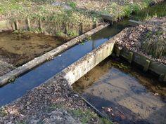 Loenen op de Veluwe - aquaduct → stekelbaarsjes in de Loenense beek en eenmaal een muscusrat in de Strobosche beek