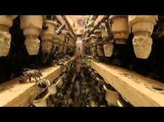 Заводите, люди, пчёл! (анонс) - YouTube