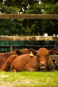 Say hello to the animals at Hackney City Farm Cheap Date Ideas, City Farm, Capital City, Say Hello, England, Dating, London, Pennies, Bucket
