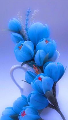 exotic flowers pictures and names Beautiful Flowers Wallpapers, Beautiful Rose Flowers, Beautiful Nature Wallpaper, Exotic Flowers, Amazing Flowers, Blue Flowers, Blossom Garden, Blossom Flower, Flower Art