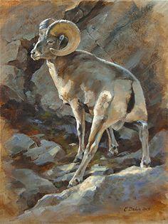 Turn About - Bighorn by Charity Dakin Oil ~ 12 x 9