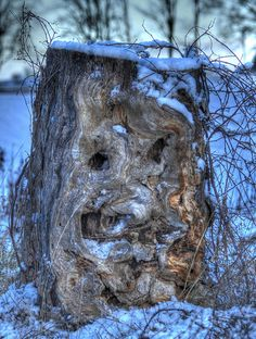 Face in the Tree by Annette Jewell Weird Trees, Enchanted Tree, Tree People, Tree Faces, Tree Carving, Unique Trees, Nature Tree, In The Tree, Tree Art