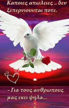Pinned by sherry decker Dove Images, Dove Pictures, Love Heart Images, Angel Pictures, Jesus Pictures, Beautiful Love Pictures, Beautiful Gif, Beautiful Roses, Flower Phone Wallpaper
