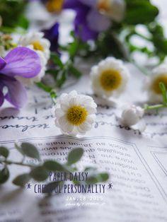 道のりを記憶に残して: 乾いてからも色や形が変わらない、明るい雰囲気の花かんざし/花・ガーデニング
