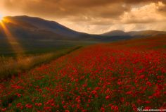 Red carpet by Andrea Visca on 500px