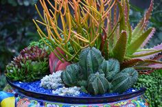 Succulents in talavera by designer Laura Eubanks at Design for Serenity. Succulents In Containers, Planting Succulents, Foliage Plants, Air Plants, Organic Mulch, Butterfly Bush, How To Attract Birds, Types Of Soil, Plant Needs