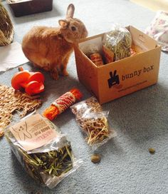 Cut Of Date Is Getting Closer Make Sure Your Little Fur Ball Gets One By X-mas Get It > <
