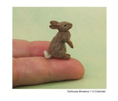 miniature rabbit