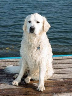 Der See ist so erfrischend, dass sogar Henry hier die Abkühlung sucht! #hotelteichwirt #almgasthof Animals, Winter Vacations, Addiction, Animales, Animaux, Animal, Animais