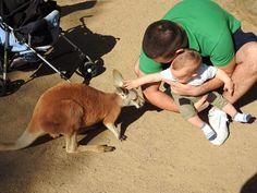 His little kangaroo friend. #friends #kangaroo #daddy #baby #babyboy #enjoy #enjoylife #cute #hubby #son #currumbinwildlifesanctuary #currumbin #goldcoast #australia #qld by nenadsmummy http://ift.tt/1X9mXhV