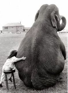 I always wanted an elephant! Love this picture